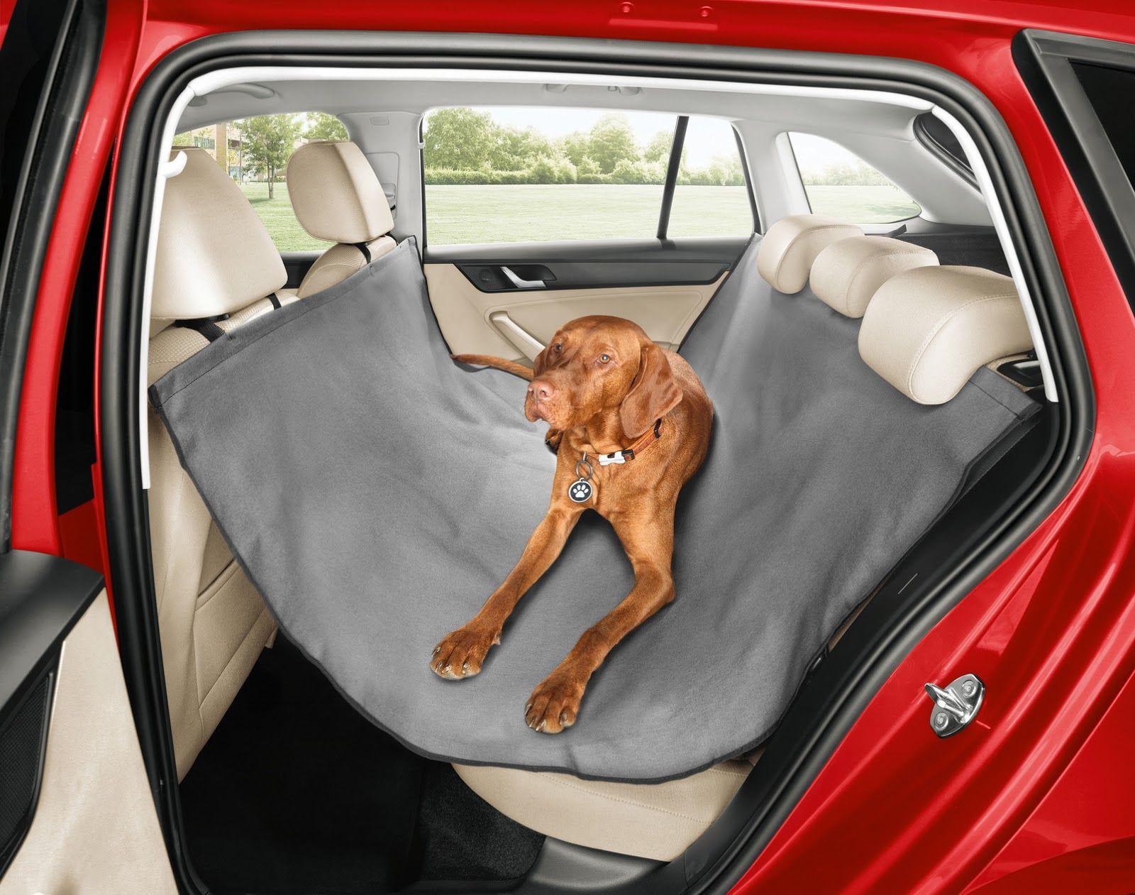 Σκύλος κάθεται στο πίσω κάθισμα αυτοκινήτου πάνω στο ειδικό κάλυμμα καθισμάτων