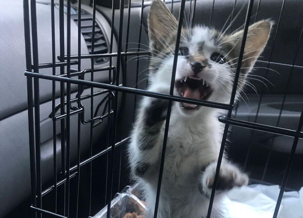 Θυμωμένη γάτα μέσα σε κλουβί μεταφοράς στο μπροστινό κάθισμα