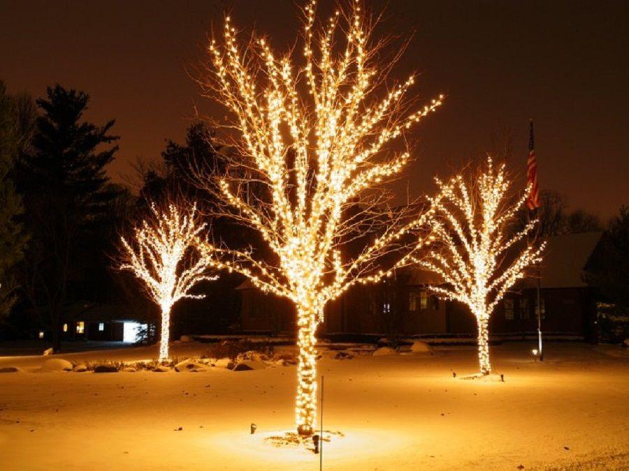 Τρία δέντρα στολισμένα με άσπρα λαμπάκια για τα Χριστούγεννα