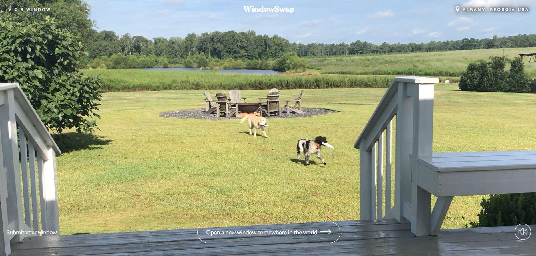 Στιγμιότυπο που δείχνει δύο σκυλιά να παίζουν στο γρασίδι από την εφαρμογή Window Swap