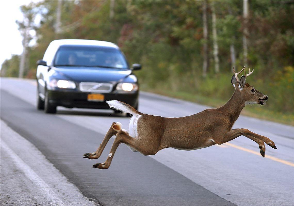 Ένα ελάφι πετάγεται στη μέση του δρόμου λίγο πριν περάσει από μπροστά του ένα αυτοκίνητο