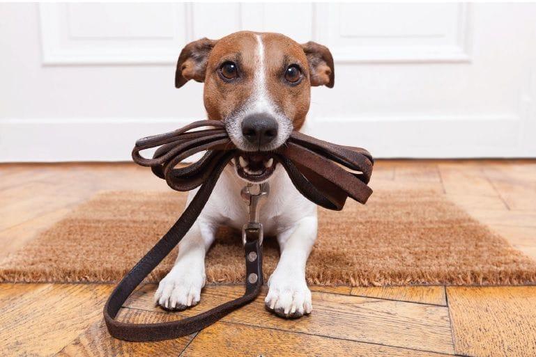Καθισμένος σκύλος κοιτάει ευθεία μπροστα και δαγκωνει το λουρί του