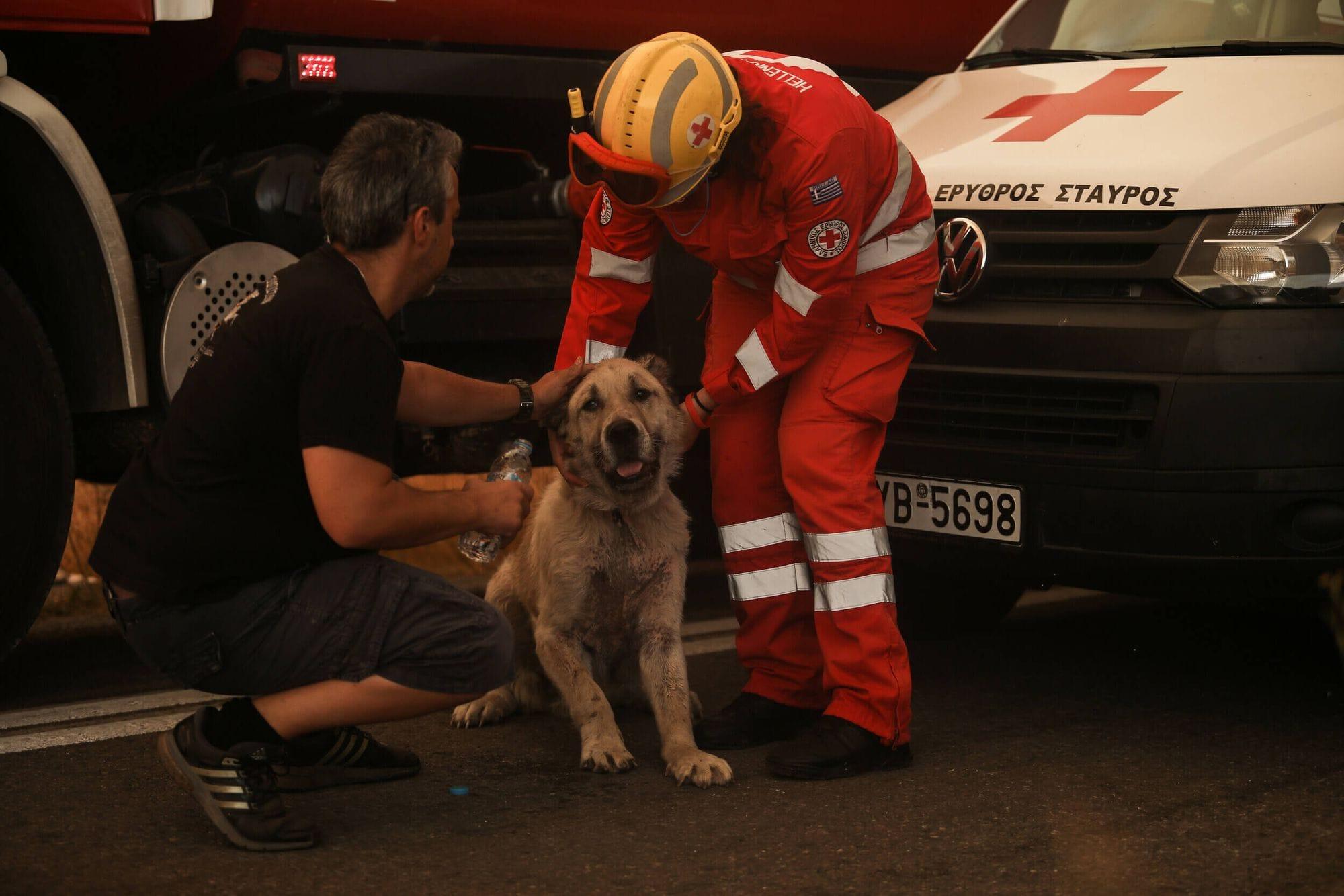 Ένας εθελοντής και ένας πυροσβέστης χαϊδεύουν και δίνουν νερό σε έναν σκύλο